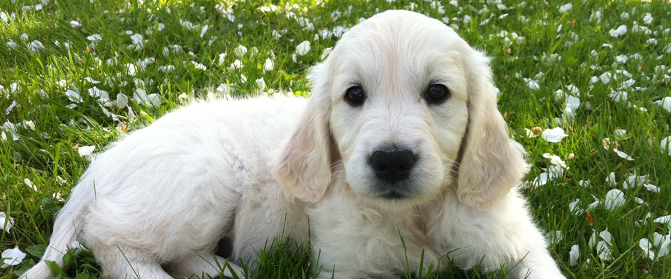 Daily mid-day visits for puppies helps maintain a consistent housebreaking schedule.